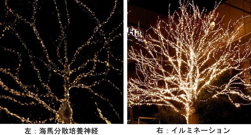 synapse_ and_illumination